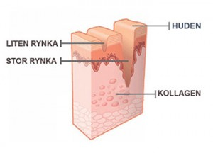 Tillsätt kollagen till din hud.